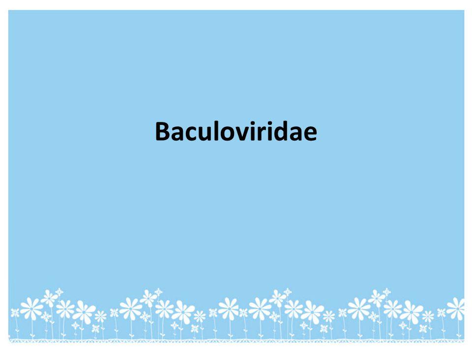 Baculoviridae