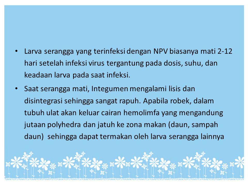 Larva serangga yang terinfeksi dengan NPV biasanya mati 2-12 hari setelah infeksi virus tergantung pada dosis, suhu, dan keadaan larva pada saat infek
