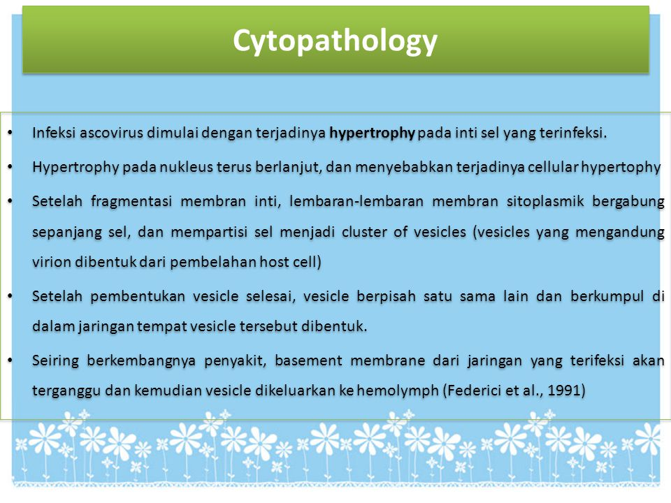Cytopathology Infeksi ascovirus dimulai dengan terjadinya hypertrophy pada inti sel yang terinfeksi. Hypertrophy pada nukleus terus berlanjut, dan men
