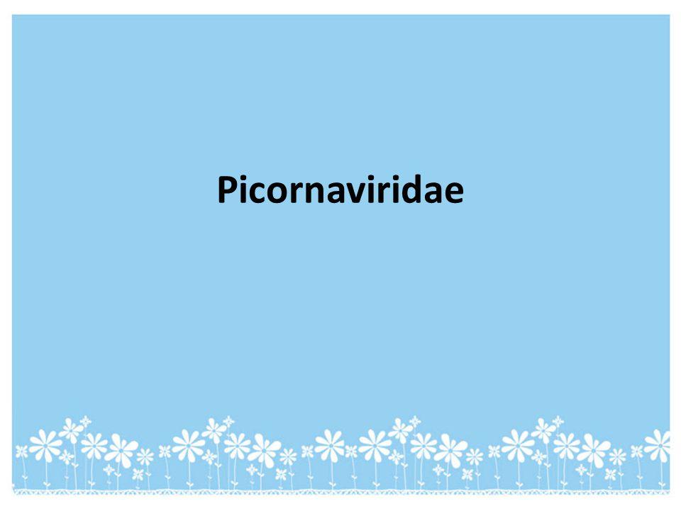 Picornaviridae