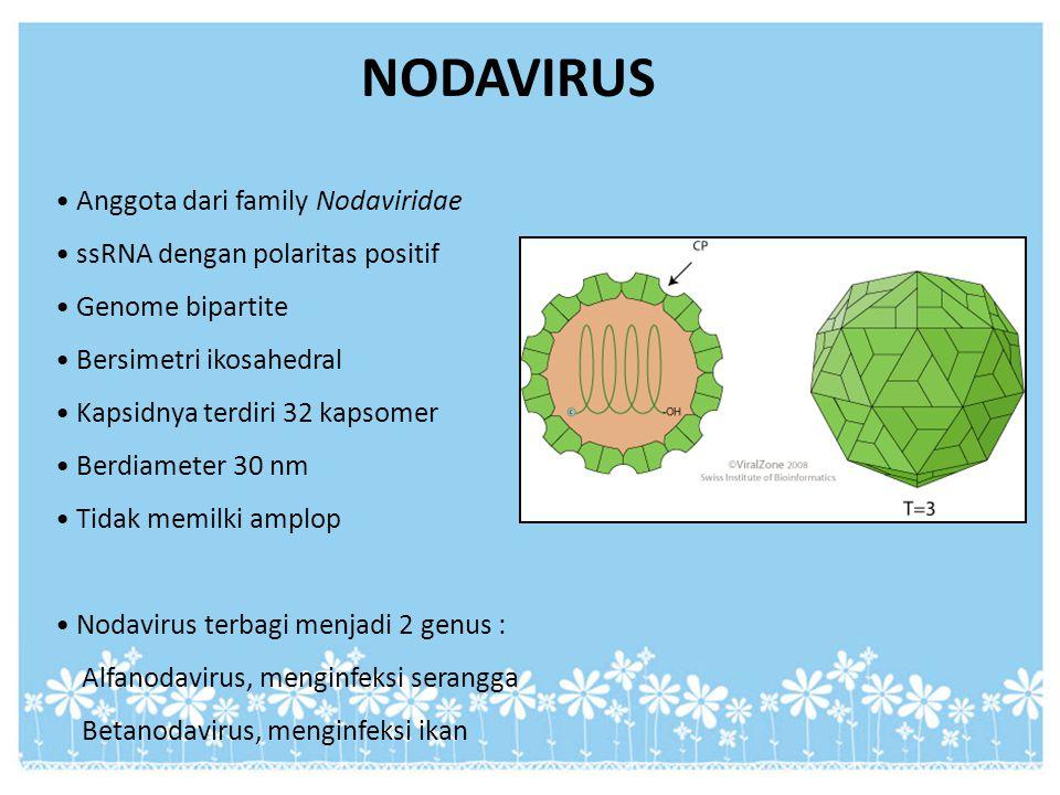 NODAVIRUS Anggota dari family Nodaviridae ssRNA dengan polaritas positif Genome bipartite Bersimetri ikosahedral Kapsidnya terdiri 32 kapsomer Berdiam