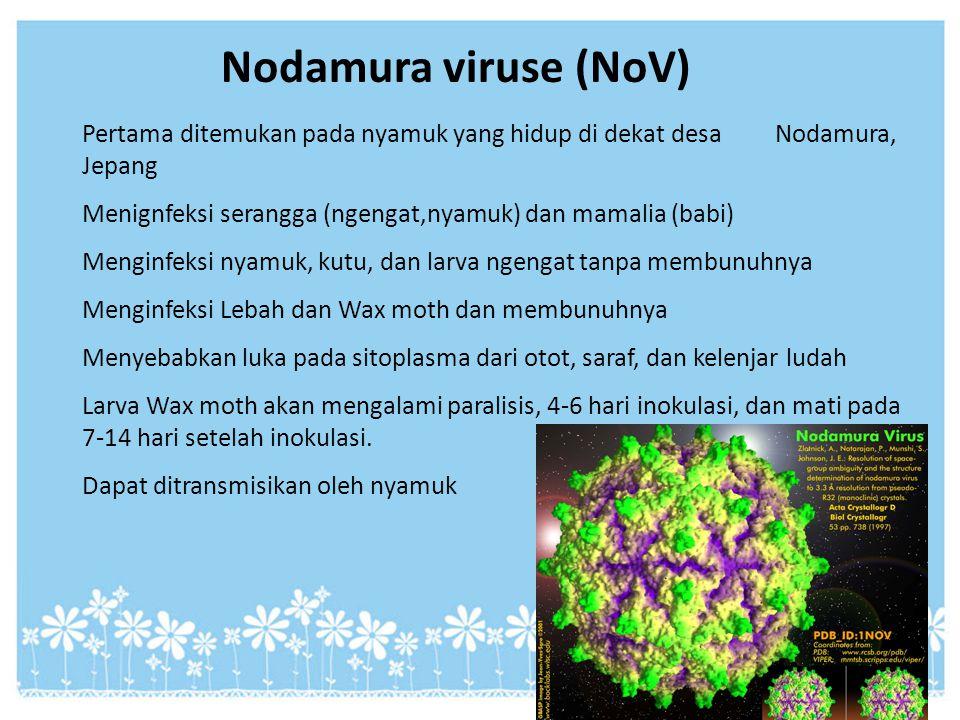 Nodamura viruse (NoV) Pertama ditemukan pada nyamuk yang hidup di dekat desa Nodamura, Jepang Menignfeksi serangga (ngengat,nyamuk) dan mamalia (babi)