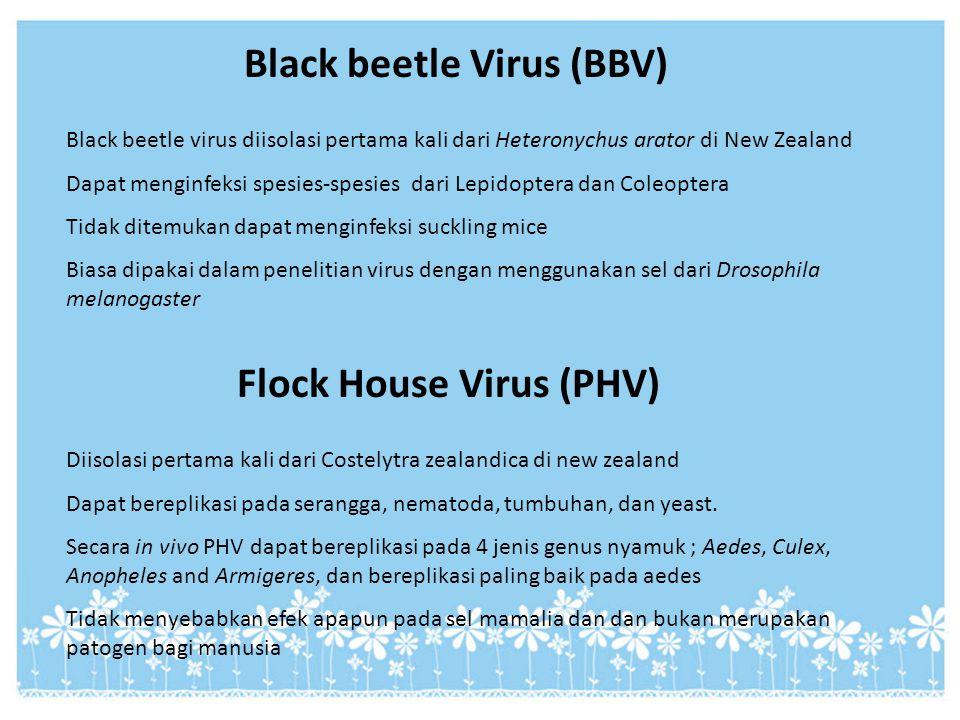 Black beetle Virus (BBV) Black beetle virus diisolasi pertama kali dari Heteronychus arator di New Zealand Dapat menginfeksi spesies-spesies dari Lepi