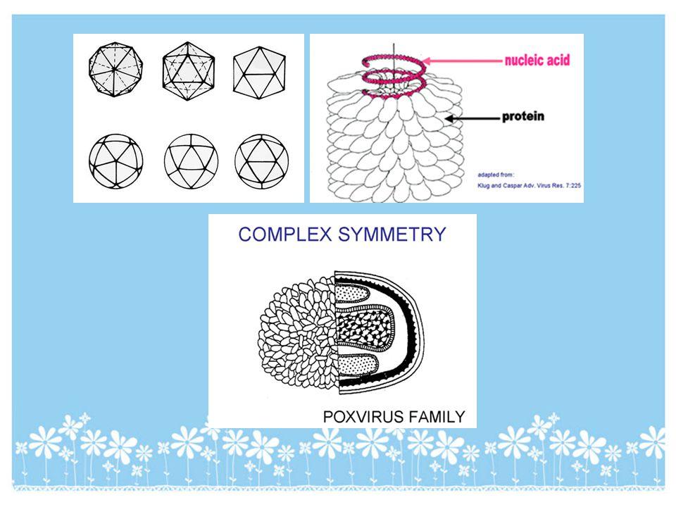 REOVIRIDAE Family : Reoviridae Genus : Cypovirus Cy=cytoplasmic, po=polyhedorsis Membentuk struktur polyhedron (kristal protein) di dalam sitoplasma inang.