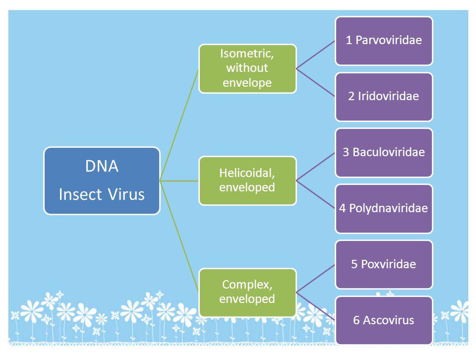 DNA Insect Virus Isometric, without envelope 1 Parvoviridae2 Iridoviridae Helicoidal, enveloped 3 Baculoviridae4 Polydnaviridae Complex, enveloped 5 P