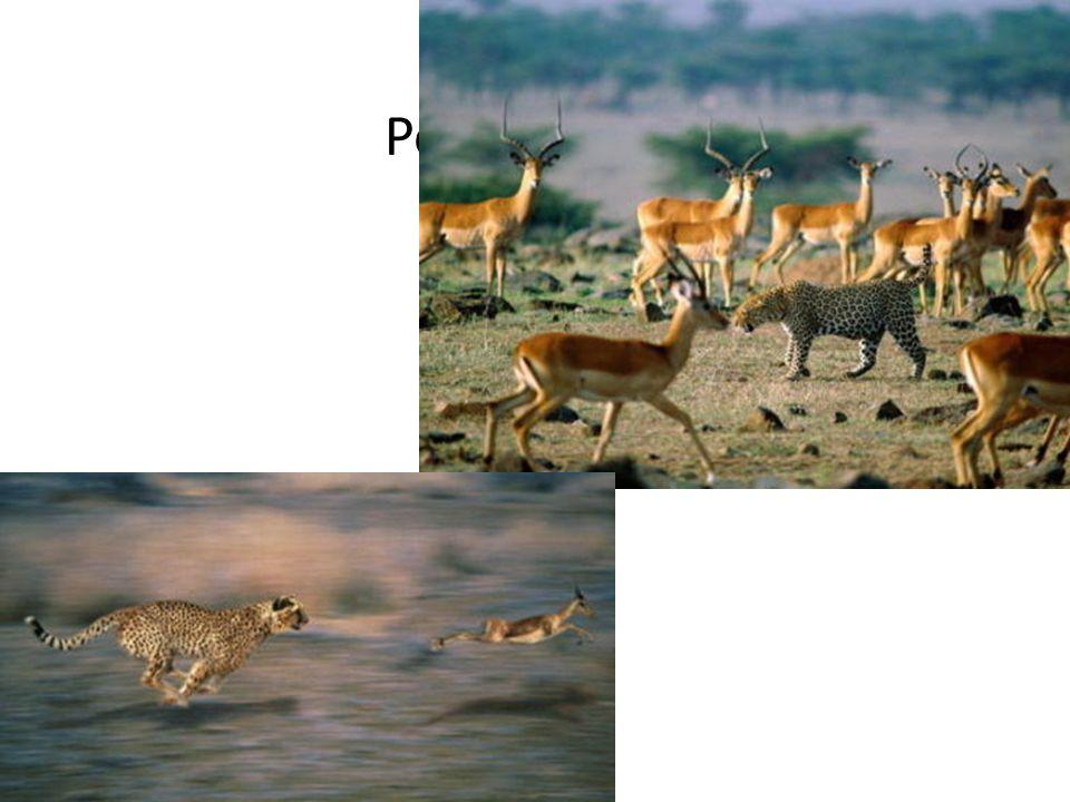 Komunitas Kumpulan populasi yang tinggal bersama pada suatu areal tertentu, dimana terjadi suatu bentuk hubungan atau interaksi, baik antara individu sejenis (intraspecies) maupun antara jenis yang berbeda (antarspecies).