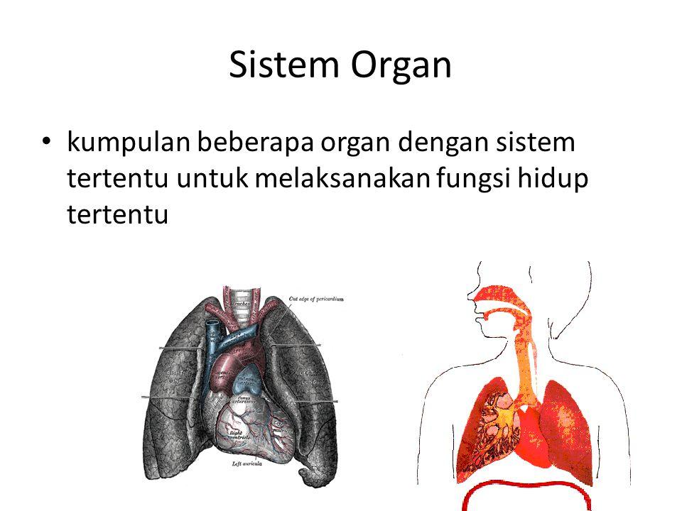 Sistem Organ kumpulan beberapa organ dengan sistem tertentu untuk melaksanakan fungsi hidup tertentu