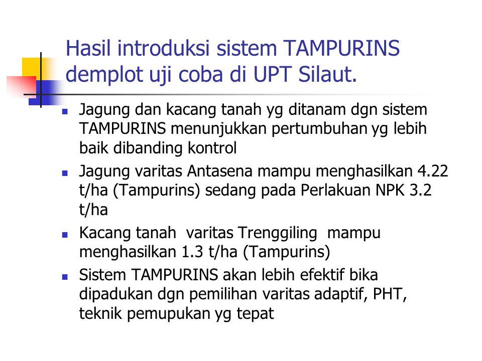 Hasil introduksi sistem TAMPURINS demplot uji coba di UPT Silaut. Jagung dan kacang tanah yg ditanam dgn sistem TAMPURINS menunjukkan pertumbuhan yg l