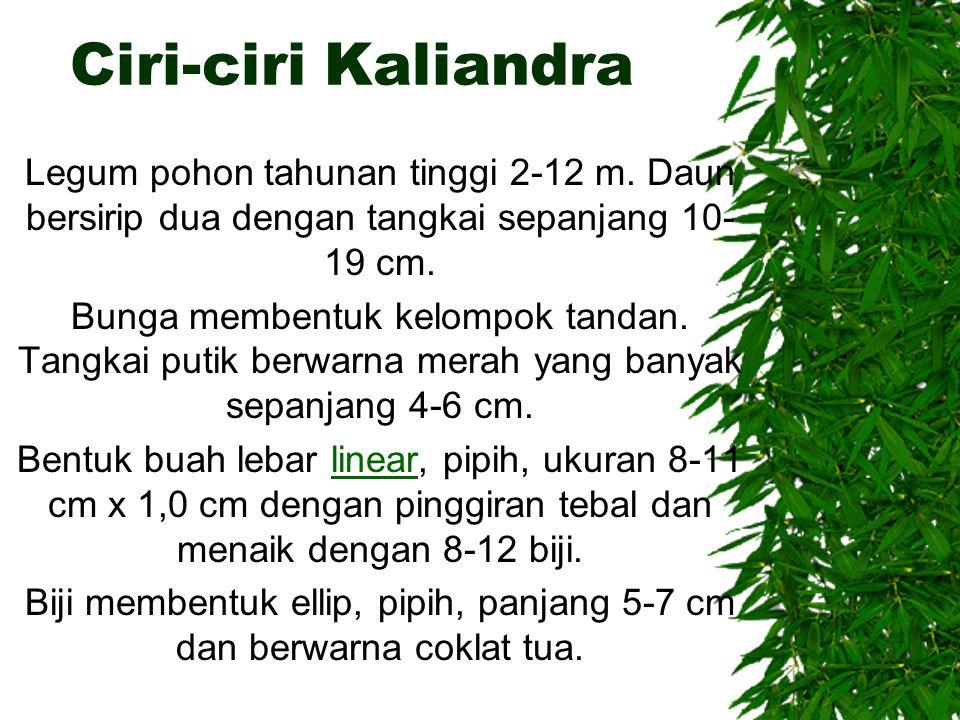 Ciri-ciri Kaliandra Legum pohon tahunan tinggi 2-12 m. Daun bersirip dua dengan tangkai sepanjang 10- 19 cm. Bunga membentuk kelompok tandan. Tangkai
