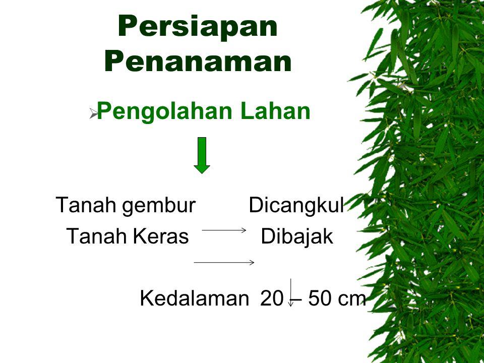 Persiapan Penanaman  Pengolahan Lahan Tanah gembur Dicangkul Tanah Keras Dibajak Kedalaman 20 – 50 cm