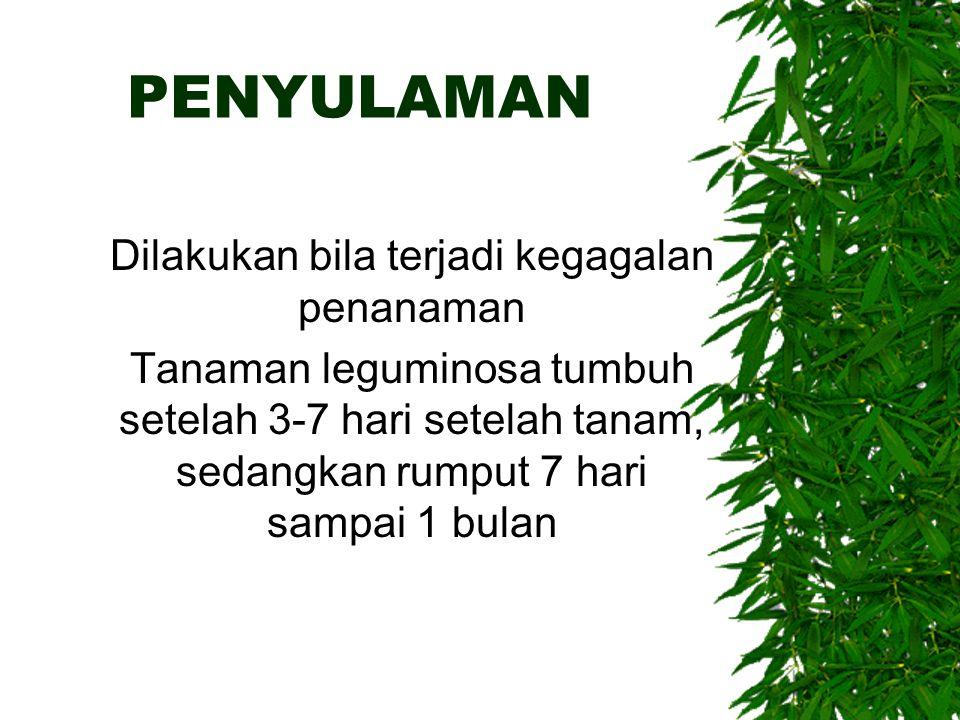 PENYULAMAN Dilakukan bila terjadi kegagalan penanaman Tanaman leguminosa tumbuh setelah 3-7 hari setelah tanam, sedangkan rumput 7 hari sampai 1 bulan