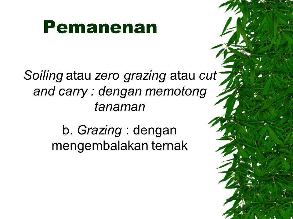 Pemanenan Soiling atau zero grazing atau cut and carry : dengan memotong tanaman b. Grazing : dengan mengembalakan ternak