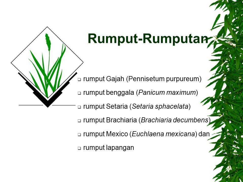Rumput-Rumputan  rumput Gajah (Pennisetum purpureum)  rumput benggala (Panicum maximum)  rumput Setaria (Setaria sphacelata)  rumput Brachiaria (B