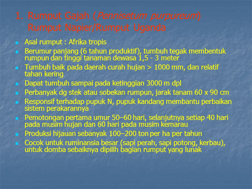R U M P U T Rumput Gajah (Pennisetum purpureum) Disebut dengan rumput napier atau rumput Uganda berasal dari afrika tropika.