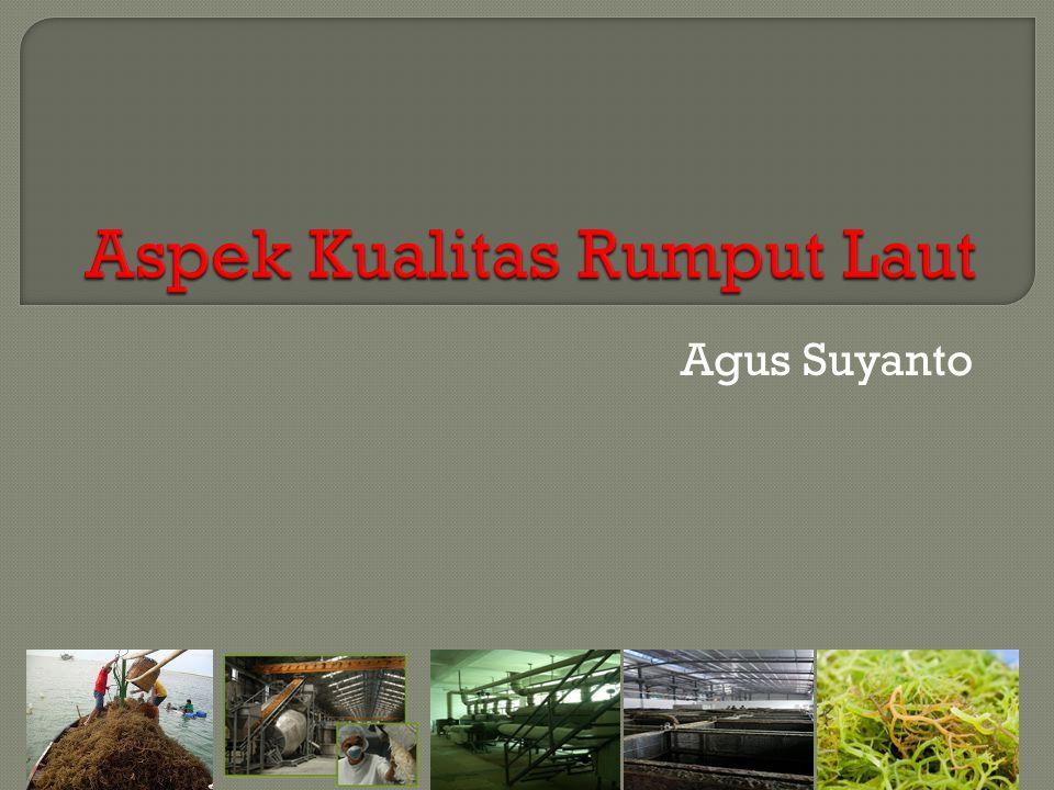  rumput laut merupakan komoditas penting untuk dikembangkan namun perlu ada peningkatan mutu agar disukai konsumen dari berbagai kalangan.