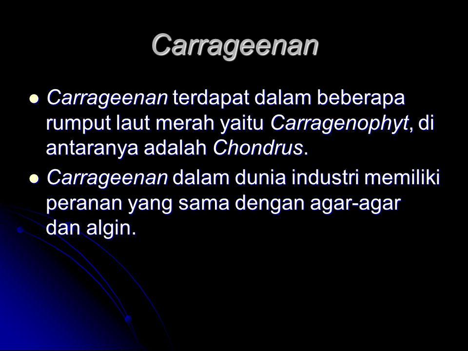 Carrageenan Carrageenan terdapat dalam beberapa rumput laut merah yaitu Carragenophyt, di antaranya adalah Chondrus. Carrageenan terdapat dalam bebera