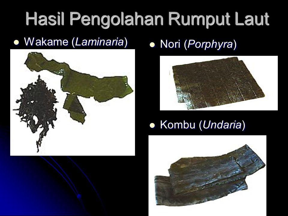 Hasil Pengolahan Rumput Laut Wakame (Laminaria) Wakame (Laminaria) Nori (Porphyra) Nori (Porphyra) Kombu (Undaria) Kombu (Undaria)