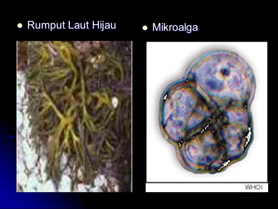 Kualitas yang Harus Dipenuhi oleh Rumput Laut yang Aman Dikonsumsi