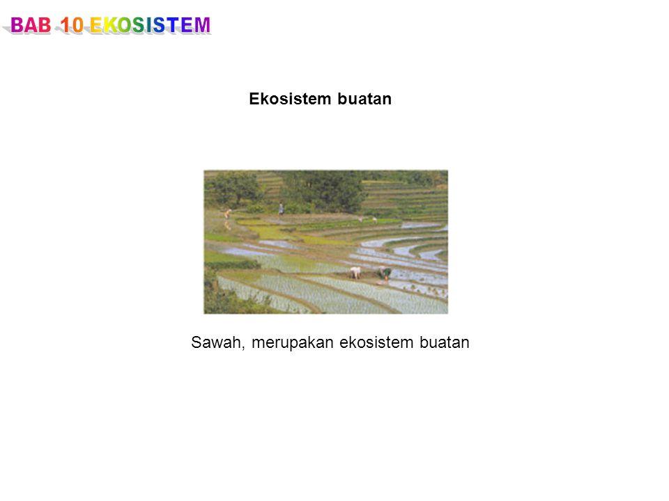 Ekosistem buatan Sawah, merupakan ekosistem buatan