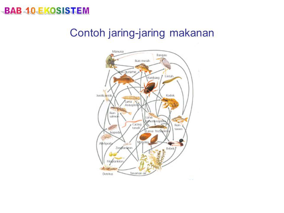 Contoh jaring-jaring makanan