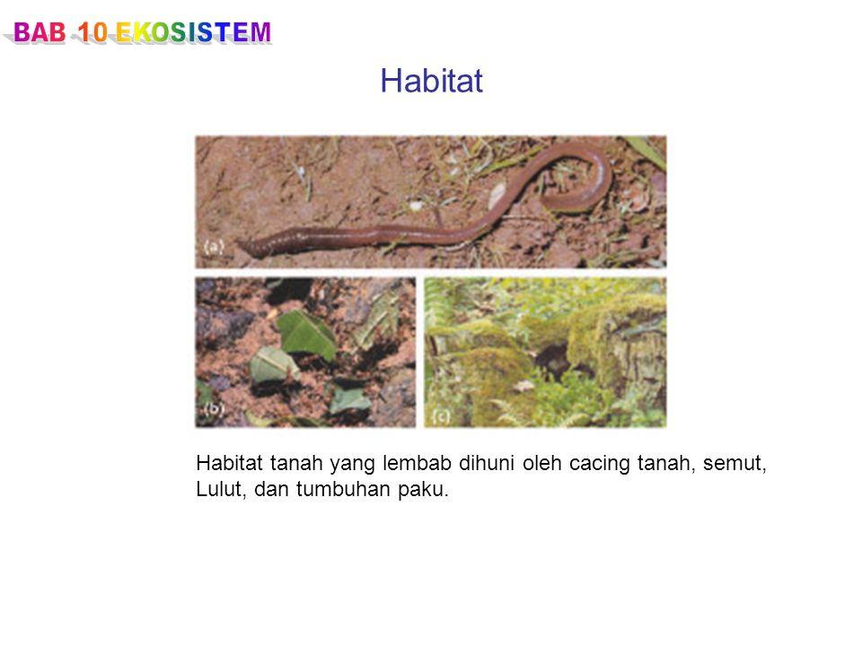 Habitat Habitat tanah yang lembab dihuni oleh cacing tanah, semut, Lulut, dan tumbuhan paku.
