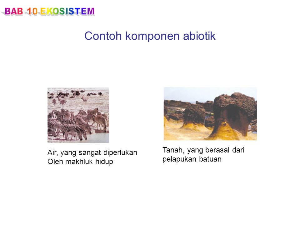 Contoh komponen abiotik Air, yang sangat diperlukan Oleh makhluk hidup Tanah, yang berasal dari pelapukan batuan