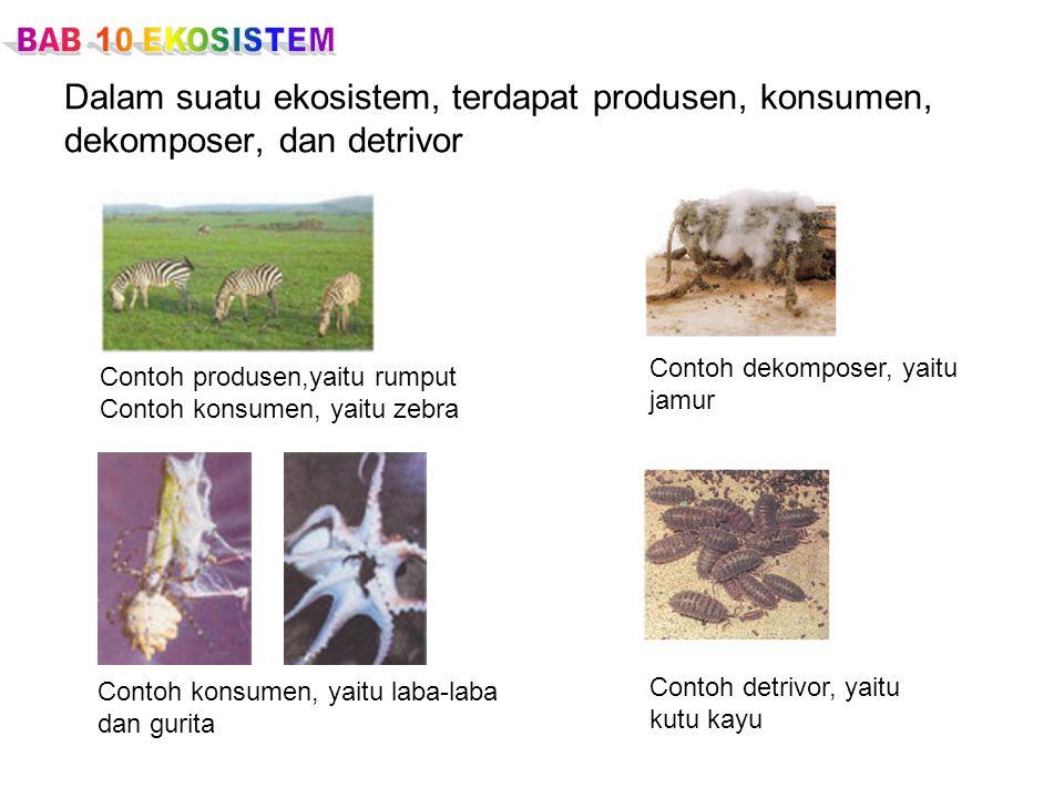Dalam suatu ekosistem, terdapat produsen, konsumen, dekomposer, dan detrivor Contoh dekomposer, yaitu jamur Contoh detrivor, yaitu kutu kayu Contoh pr