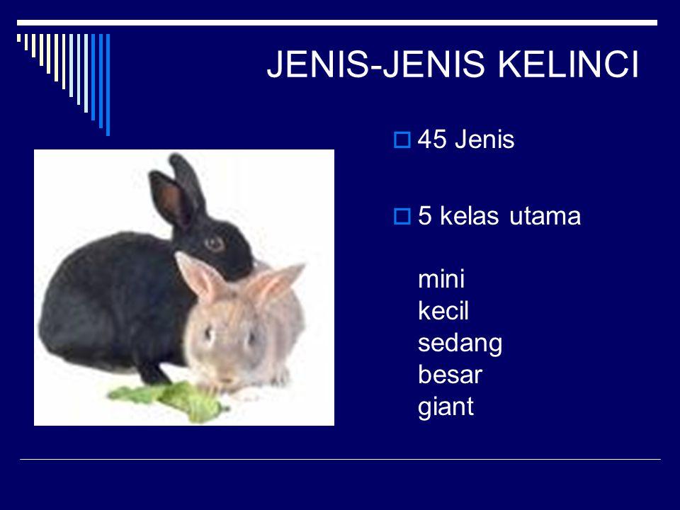 JENIS-JENIS KELINCI  45 Jenis  5 kelas utama mini kecil sedang besar giant