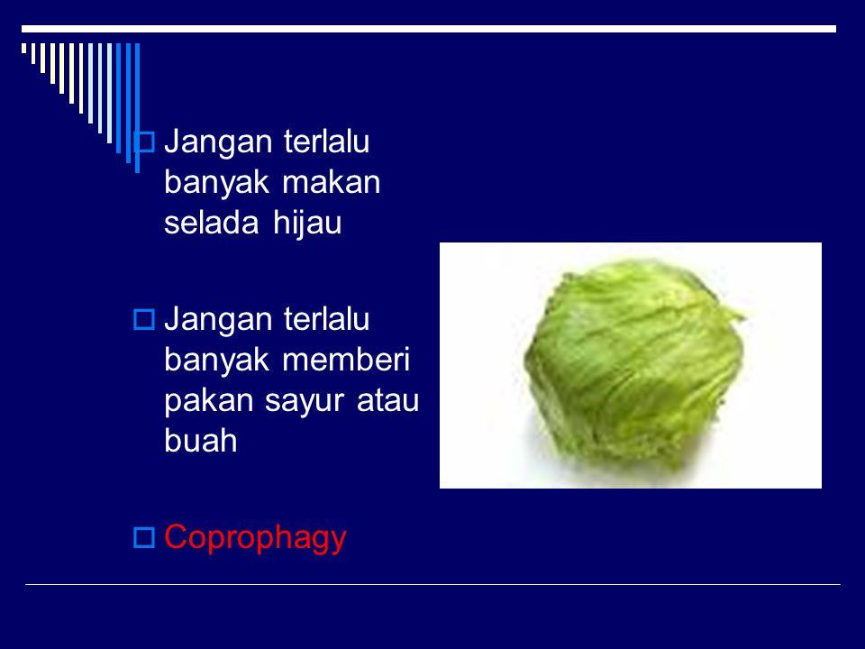  Jangan terlalu banyak makan selada hijau  Jangan terlalu banyak memberi pakan sayur atau buah  Coprophagy