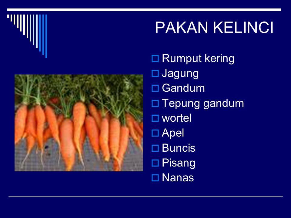 PAKAN KELINCI  Rumput kering  Jagung  Gandum  Tepung gandum  wortel  Apel  Buncis  Pisang  Nanas