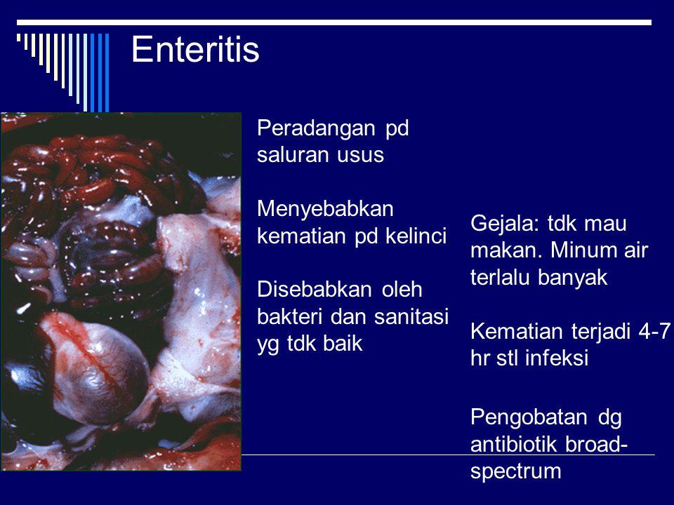 Enteritis Peradangan pd saluran usus Menyebabkan kematian pd kelinci Disebabkan oleh bakteri dan sanitasi yg tdk baik Gejala: tdk mau makan.