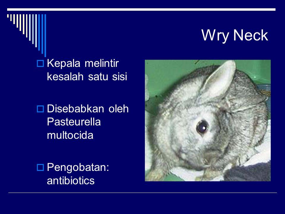 Wry Neck  Kepala melintir kesalah satu sisi  Disebabkan oleh Pasteurella multocida  Pengobatan: antibiotics