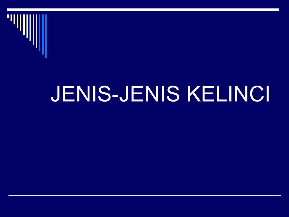 JENIS-JENIS KELINCI