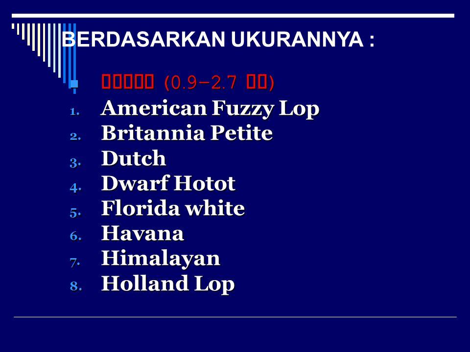 9. Jersey wolly 10. Mini Lop 11. Mini Rex 12. Netherland Dwarf 13. Polish 14. Silver 15. Tan