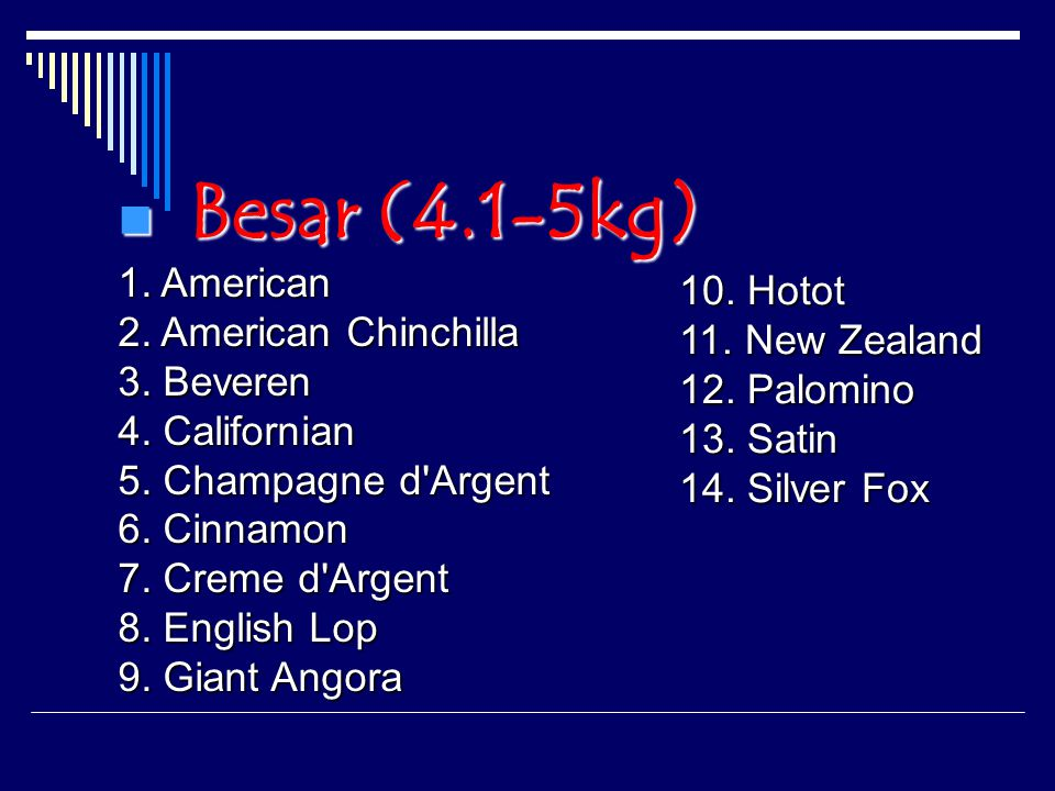 Besar (4.1-5kg) Besar (4.1-5kg) 1.American 2. American Chinchilla 3.