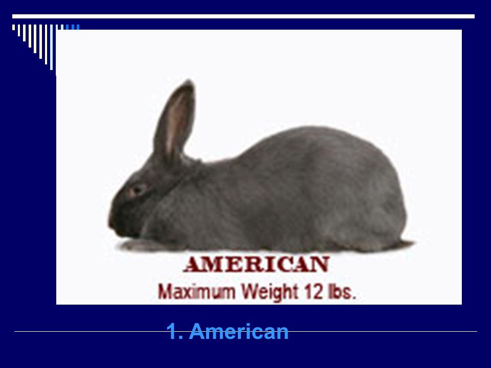 1. American