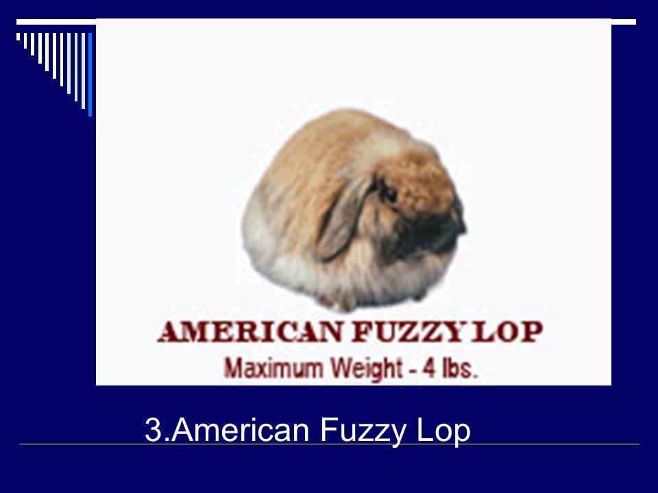 3.American Fuzzy Lop
