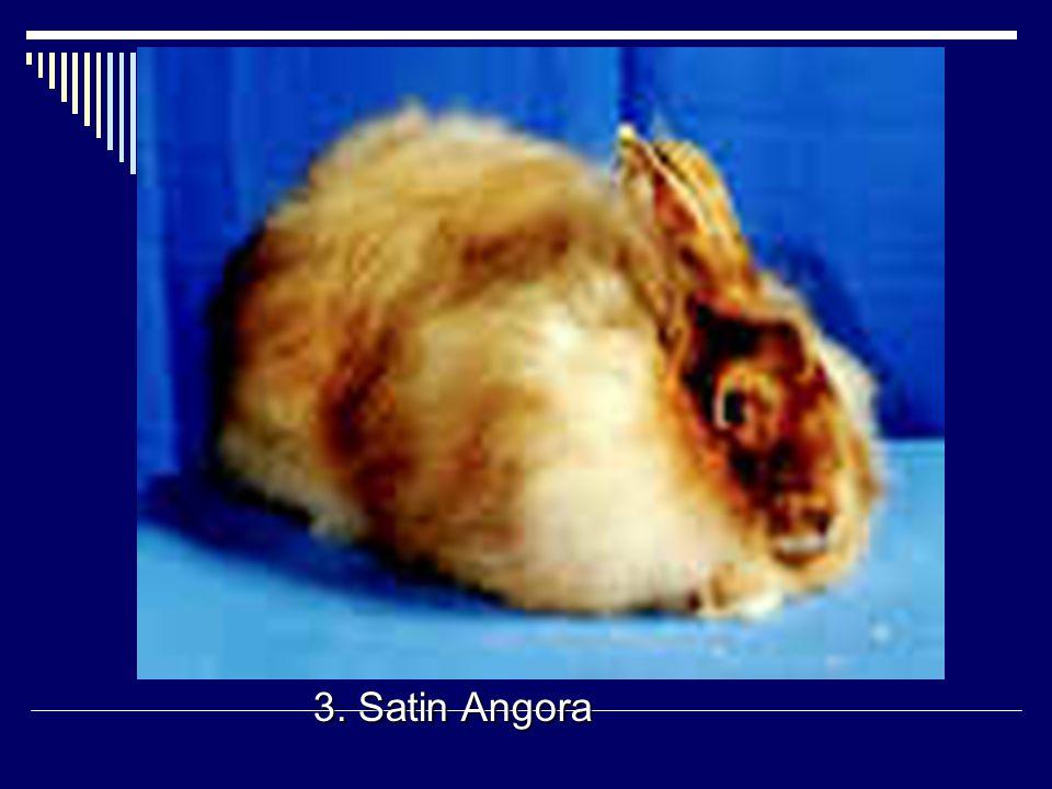 3. Satin Angora