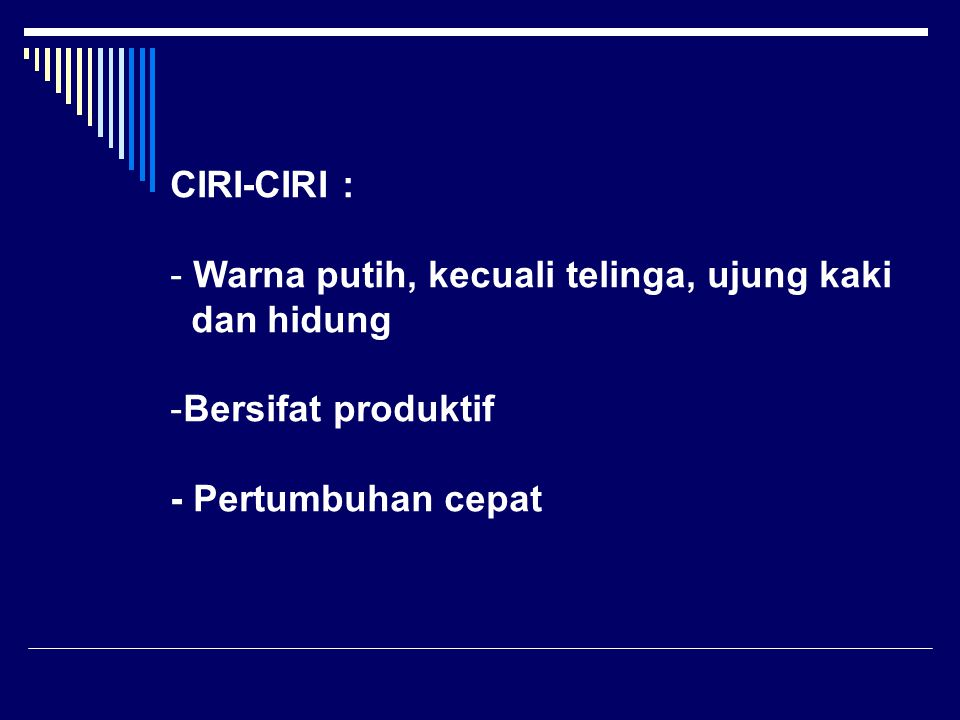CIRI-CIRI : - Warna putih, kecuali telinga, ujung kaki dan hidung -Bersifat produktif - Pertumbuhan cepat
