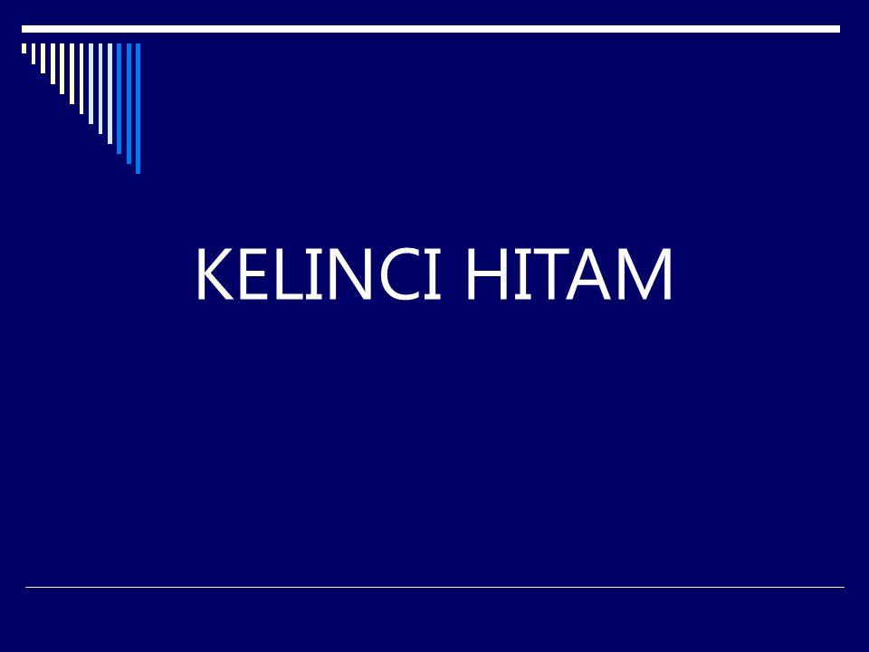 KELINCI HITAM