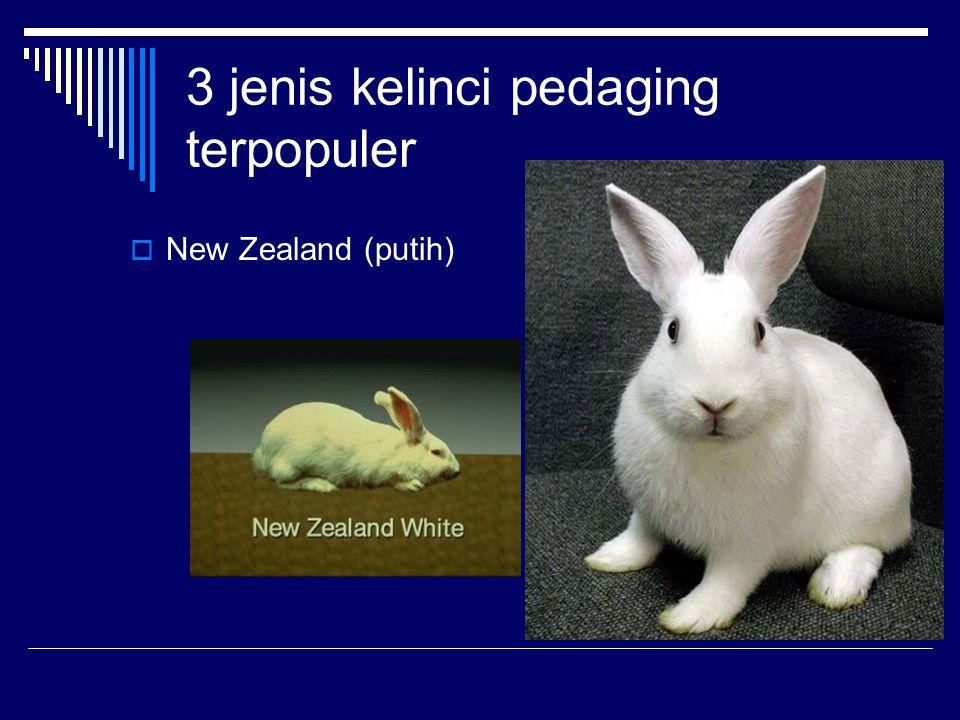 3 jenis kelinci pedaging terpopuler  New Zealand (putih)