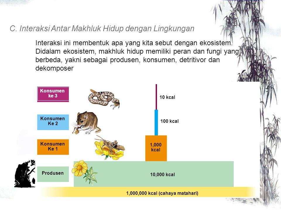 B. Interaksi Antar Populasi yang berbeda Bentuk interaksi antar populasi dalam ekosistem antara lain dapat berupa predasi, kompetisi, atau simbiosis P