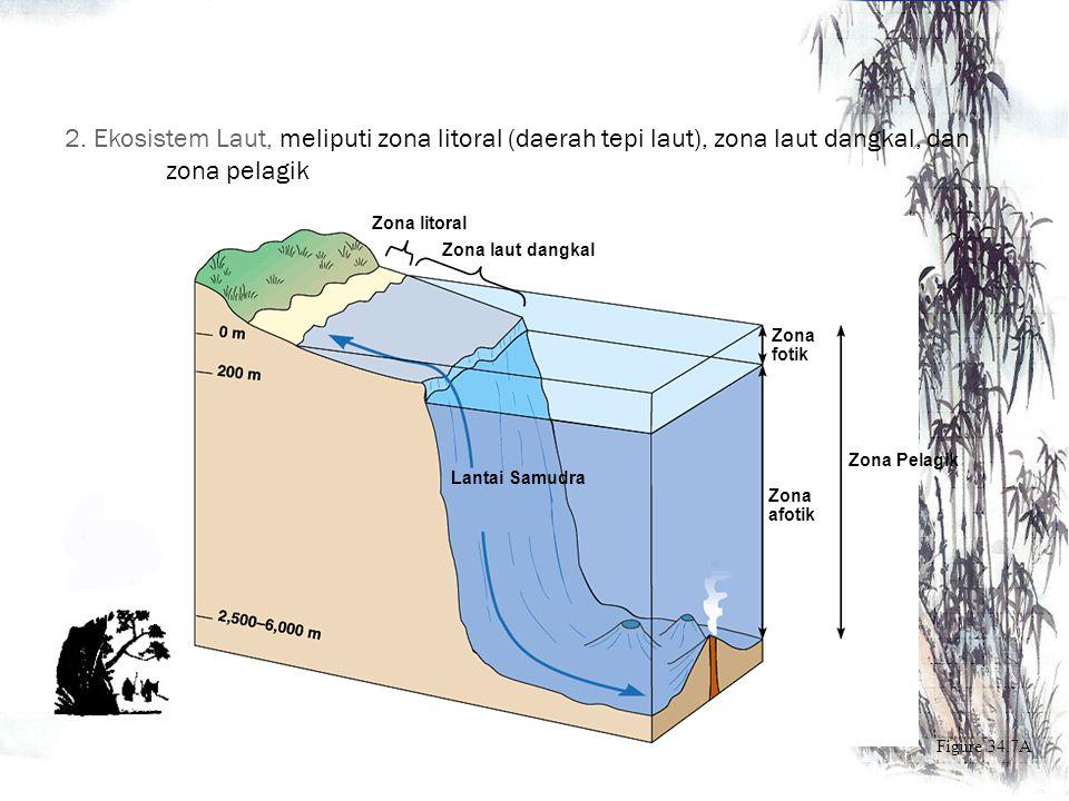 b. Ekosistem air tawar lontik Ciri : Memiliki air yang berarus