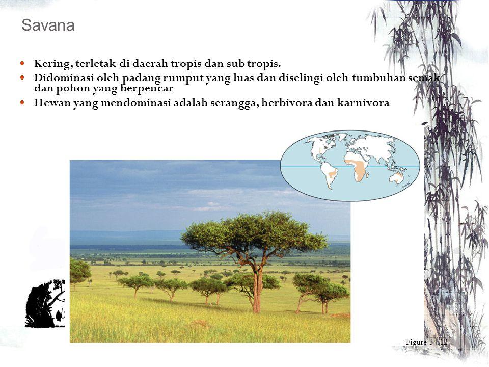 Umumnya terletak di daerah katulistiwa Merupakan ekosistem dengan keanekaragaman yang tinggi Curah hujan tinggi (200-450 cm pertahun) Mendapat sinar m