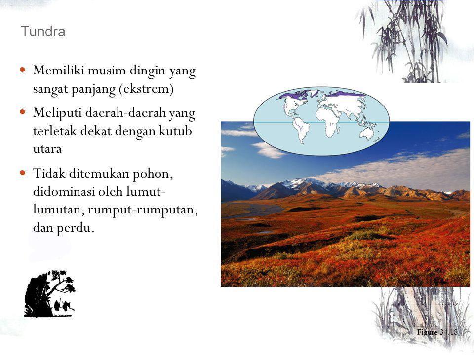 Figure 34.15 Taiga - Didominasi oleh tumbuhan konifer - Terletak di daerah sub tropis atau pegunungan - Memiliki musim dingin yang panjang, musim pana