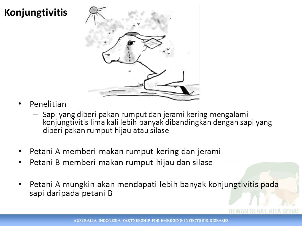 AUSTRALIA INDONESIA PARTNERSHIP FOR EMERGING INFECTIOUS DISEASES Akhir video