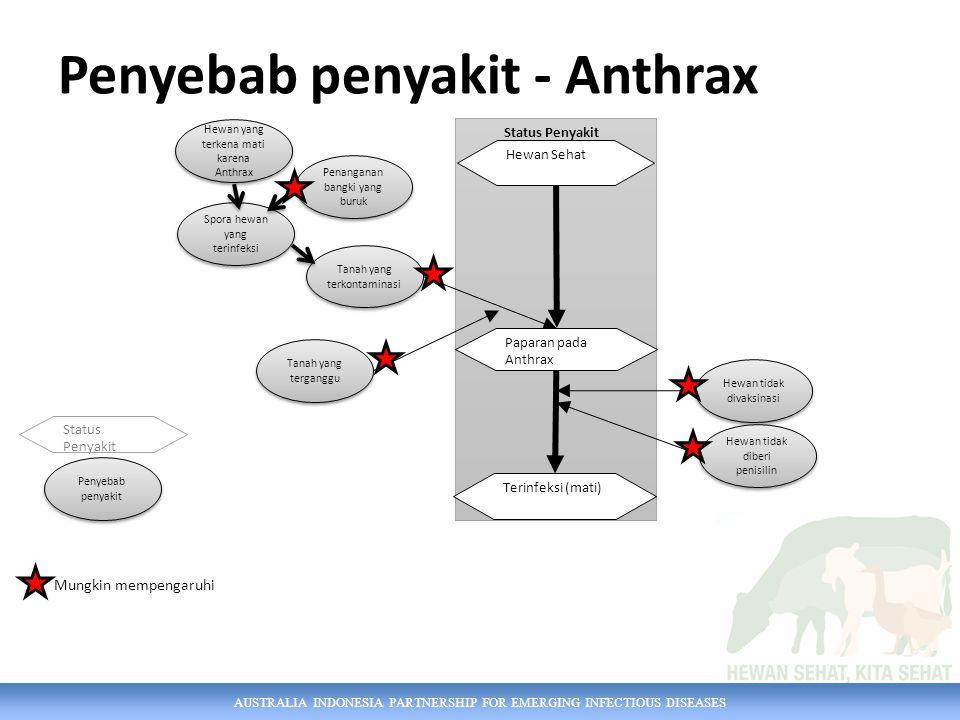 AUSTRALIA INDONESIA PARTNERSHIP FOR EMERGING INFECTIOUS DISEASES Penyebab penyakit - Anthrax Tanah yang terganggu Hewan yang terkena mati karena Anthrax Penanganan bangki yang buruk Spora hewan yang terinfeksi Tanah yang terkontaminasi Penyebab penyakit Hewan tidak divaksinasi Status Penyakit Paparan pada Anthrax Terinfeksi (mati) Status Penyakit Hewan Sehat Hewan tidak diberi penisilin Mungkin mempengaruhi