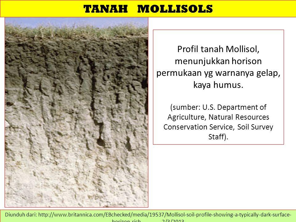 TANAH MOLLISOLS Profil tanah Mollisol, menunjukkan horison permukaan yg warnanya gelap, kaya humus. (sumber: U.S. Department of Agriculture, Natural R