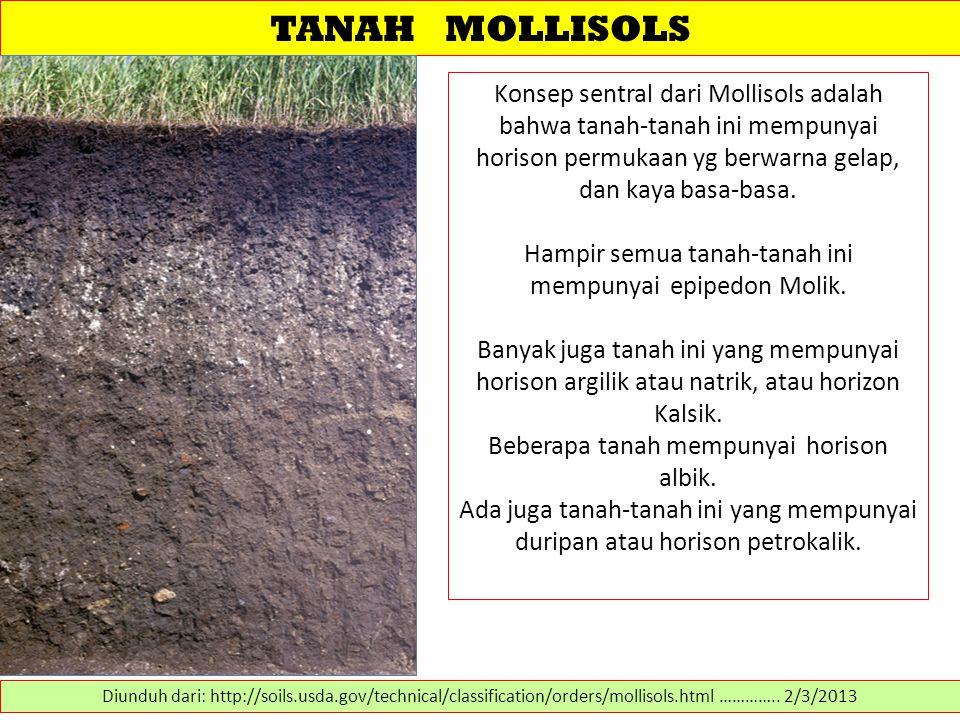 TANAH MOLLISOLS Konsep sentral dari Mollisols adalah bahwa tanah-tanah ini mempunyai horison permukaan yg berwarna gelap, dan kaya basa-basa. Hampir s