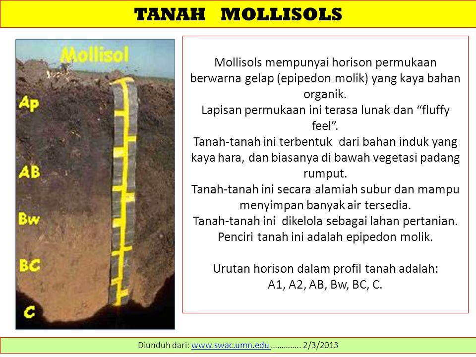 TANAH MOLLISOLS Mollisols mempunyai horison permukaan berwarna gelap (epipedon molik) yang kaya bahan organik. Lapisan permukaan ini terasa lunak dan